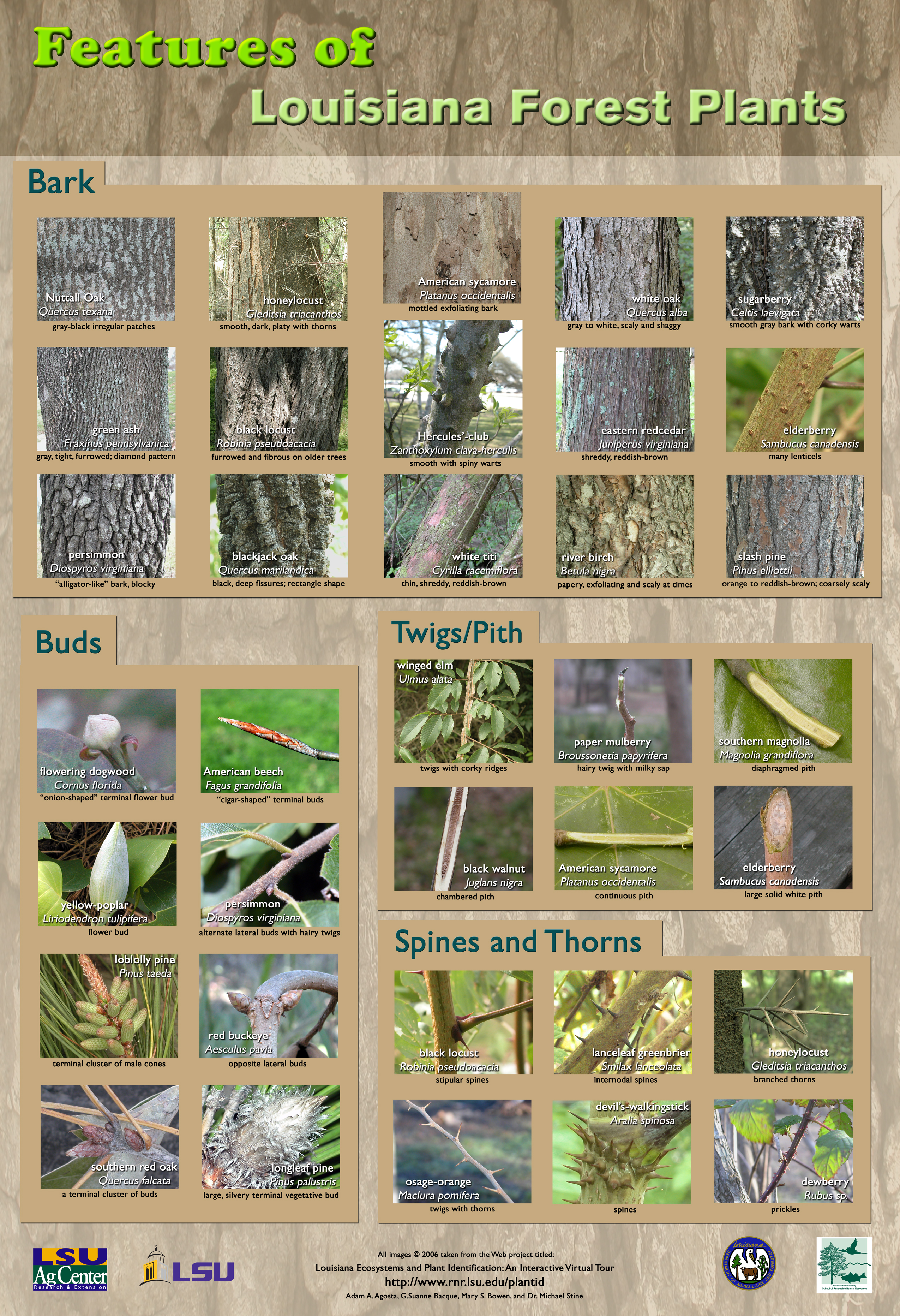 Forests Louisiana Mini-poster Of Plants Series