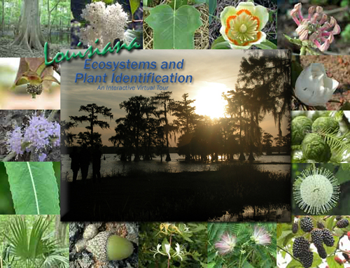 Louisiana Plant Identification and Interactive Ecoysytem Virtual Tours